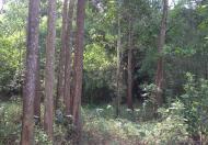 Bán 6 -10 ha đất 50 năm tại Đú Sáng, Kim Bôi, Hoà Bình