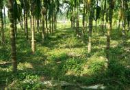 Bán trang trại đẹp tại Yên Thế Bắc Giang, giá rẻ
