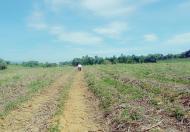 Bán đất đã có dự án trại bò, diện tích 20 ha, vị trí đẹp đất bằng phẳng