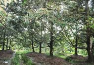 Bán vườn cây Quốc Lộ 20, Hà Lâm, Đạ Huoai, Lâm Đồng 40000m2, giá 4.7 tỷ TL