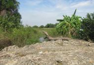 Đất Lê Văn Lương Nhà Bè, bán đất mặt tiền Lê Văn Lương, 11400m2, giá 3.8 triệu/m2