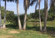 Bán đất vườn đường số 10, P Long Phước, Quận 9, giá 1,6tr/m2