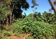 Đất hẻm xây biệt thự nhà vườn 22x30m