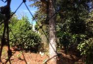 Bán đất nông nghiệp hẻm Đặng Trần Côn 5,5x36m