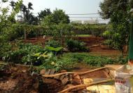 Bán trang trại cực đẹp phường Thành Nhất – TP. Buôn Ma Thuột - Đaklak