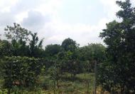 Bán gấp, rẻ mảnh đất chính chủ tại Liên Sơn – Lương Sơn – Hòa Bình