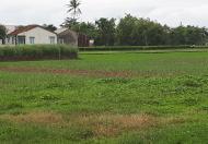 Đang cần tiền muốn bán miếng đất đường Nguyễn Văn Thời, Bình Chánh 1568m2, giá 1,25 tỷ
