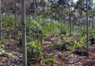 Cần tiền bán gấp 7 xào đất đẹp giáp thị trấn Kiến Đức