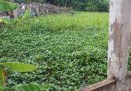 Bán đất thổ cư giá rẻ đường Đoàn Nguyễn Tuân, Bình Chánh, 250m2 giá chỉ 1,2 tỷ