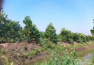 Bán đất vườn tại khu quy hoạch chăn nuôi tập trung Định Quán, Quốc Lộ 20