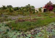 Bán đất vườn ở Tân Thạnh Đông, Củ Chi, giá 800 ngàn/m2, DT 1700m2, LH 0939 81 3696
