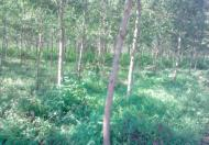 Bán đất Đơn Dương Lâm Đồng cực rẻ 138ha 5,2 tỷ