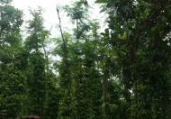 Bán 2hecta đất tại Cư Knia, Cư Jút, Đắk Nông. Giá 1.5 tỷ.