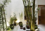 Cho thuê nhà nguyên căn 4 tầng MT Nguyễn Tri Phương