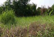 Đất vườn Lê Văn Lương, khu dân cư hiện hữu 5000m2 bán gấp 1.8 tỷ