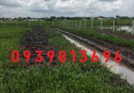 Cần bán đất vườn Tân Thạnh Đông, DT: 1100m2, giá: 880 tr, LH: 0939 813696