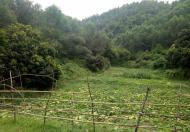 Cần chuyển nhượng 4 ha đất làm trang trại tại xã mông hóa huyện kỳ sơn tỉnh hòa bình