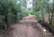 DT 2,216m2 vườn trái cây đang cho thu hoạch, xã Bảo Hòa