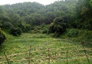 Cần chuyển nhượng 2 ha đất đường Đại Lộ Hòa Bình tại Kỳ Sơn Hòa Bình
