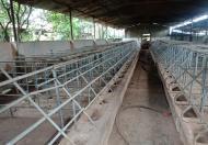 Bán trang trại đường Võ Văn Kiệt, Buôn Ma Thuột, Đắk Lắk, diện tích 3000m2, giá 1.05 tỷ