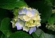 Bán gấp BT Thành Phố Giao Lưu mặt vườn hoa...GIÁ=20tỷ