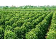 Chính chủ cần bán trang trại cafe, hồ tiêu gần trung tâm Quảng Phú- Đắk Lắk