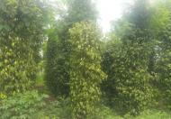 Cần bán trang trại nhà vườn diện tích: 4320 m2