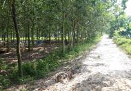 Bán trang trại cao su 10.000m2, giá 3.1 tỷ Quốc Lộ 19 (gần ngã 3 Đất Sét), xã Truông Mít