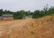 Bán gấp trang trại nghỉ dưỡng, nhà vườn tại Nghi Lộc, Nghệ An