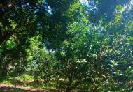Bán đất thổ cư tại Lương Sơn, Hòa Bình, giao thông thuận lợi, mặt tiền lớn