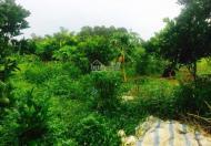 Chính chủ bán trang trại khu nghỉ dưỡng tại xã Yên Bài, Huyện Ba Vì, Hà Nội