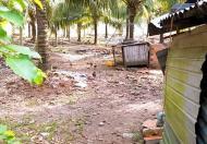 Bán vườn dừa dứa 1.200 gốc dừa đang thu hoạch 40 tr/th, DT: 15.500m2, 4.1 tỷ