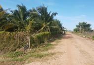Bán vườn dừa 15.500m2, có 1200 gốc dừa 5 năm tuổi, đường Hương Lộ 2, giá 4.1 tỷ