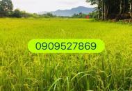 Cần bán gấp nhà Mặt tiền đường Trần Minh Quyền, P10, Quận 10.