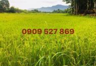 Chính chủ bán villa hẻm xe tải 10m Nguyễn Trãi, P. Nguyễn Cư Trinh, Quận 1