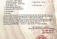 Có nền đất 56,6m2 ở Phạm Văn Bạch, Tân Bình cần bán.