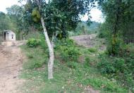Bán đất làm trang trại nhà vườn, có thổ cư giá 900 triệu