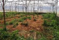 Bán đất Nông nghiệp An Tôn P.5 Đà Lạt, 290m2- 10.2 triệu/m2