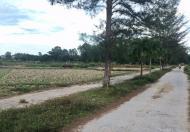 Bán đất gần nhà máy nước Quảng Nam giá chỉ 9tr/m2, pháp lý rõ ràng.
