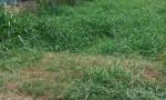 Chính chủ bán lô đất sổ hồng riêng vị trí đắc địa tại củ chi tphcm