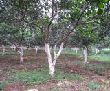 Bán đất tại Xã Thành Lập, Lương Sơn, Hòa Bình diện tích 16000m2  giá 4800 Tỷ