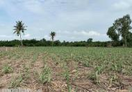 Đất nông nghiệp xã Phú Đông chỉ từ 700tr tới 900tr 1000m2