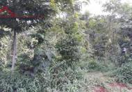 Chính chủ cần bán 4 sào đất 2 mặt tiền trước và sau  có sẵn thổ cư tại thôn 3 Cư Suê,Liên hệ :