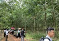 Bán rẻ lô đất 1000m2 huyện Dầu Tiếng Bình Dương, Sổ Hồng Riêng