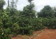 Bán 1 xe ô tô tải Foton và bán đất trồng cây tại tỉnh ĐăK Nông