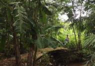 Chính chủ cần tiền bán Đất vườn tiêu 6000m2 Huyện Cẩm Mỹ, Đồng Nai