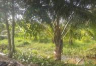 Chính chủ cần bán đất mặt tiền xã Tân Phú, huyện Tân Phú Đông, tỉnh Tiền Giang