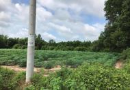 Bán đất nhơn trạch- đồng nai, đối diện thành phố mới Swan City
