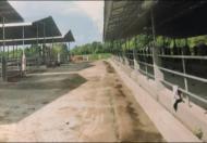 Bán Trại Bò Trà Vinh-mới xây-16hecta-đã hoàn thiện đường xá, cơ sở hạ tầng- 38.8 tỷ
