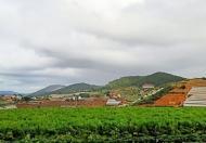 Bán lô đất biệt thự đường An Sơn, view rừng thông cực đẹp, không khí trong lành cùng với lộ giới 6m, Phường 4, Đà Lạt.